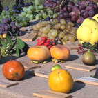 tavola delle varietà